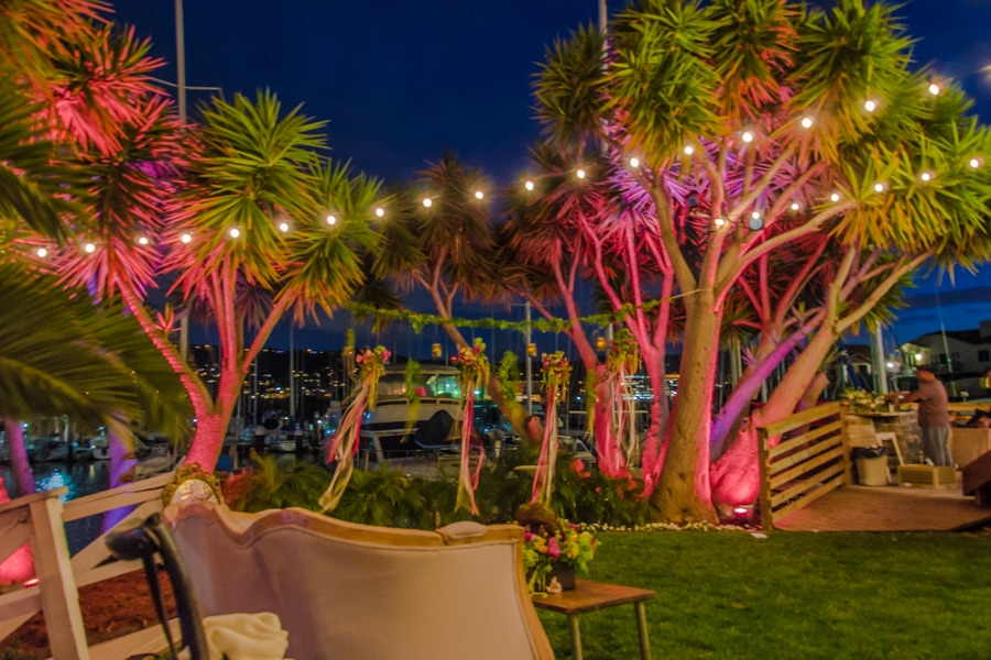Pink Coral Lights and String Lighting